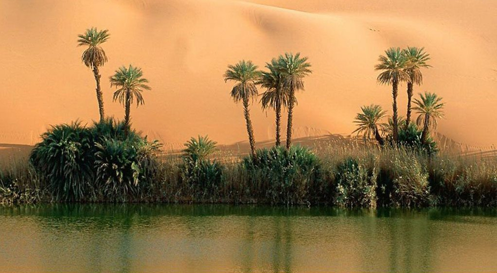 Nile-River-Reeds-&-Palms