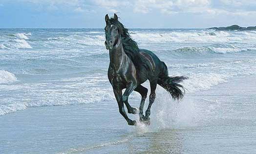 Horse-running-on-Beach