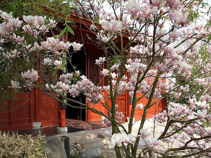 A Chinese Garden   The Rhythm Of Nature Refreshing The Heart | The Culture  Concept Circle