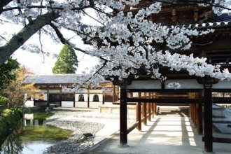 Cherry blossom viewing - japan