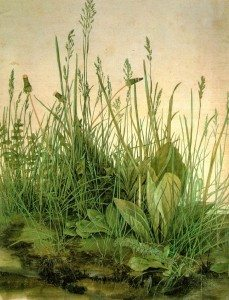 Albrecht Durer – Observing Nature