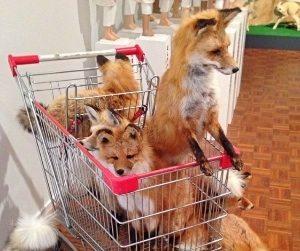 Feeling Foxy 2