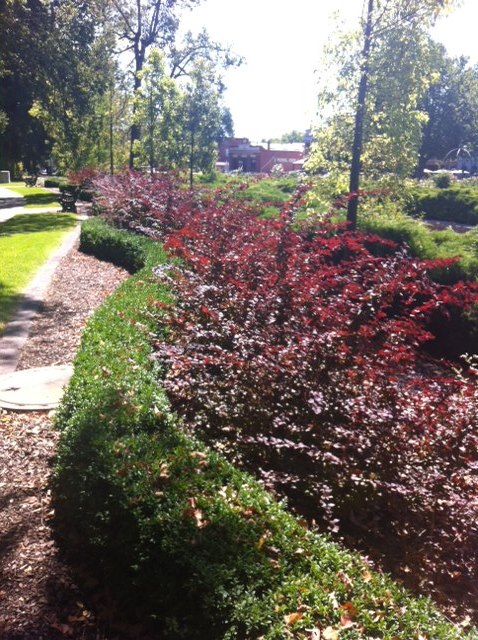 Rosalind Park, Bendigo – Enchant the Senses, As You Like It