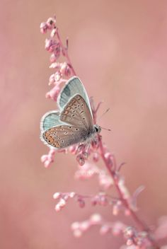 Pnatone Rose & Serenity