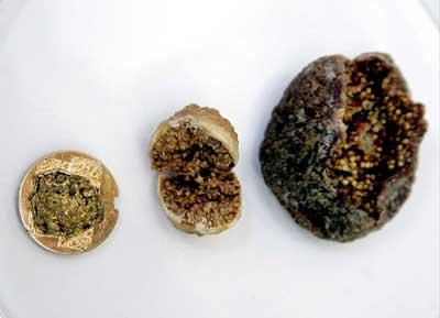 Archeology Figs