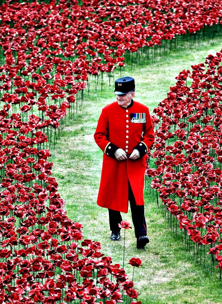 5000 Poppies Project – RHS Chelsea Flower Show, 2016