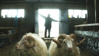 RAMS: Far from a Woolly Tale – Iceland's Sheepish Success