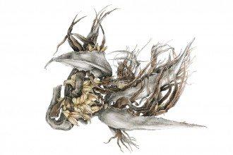 botanical-illustration-3a